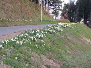 小川村里山の花
