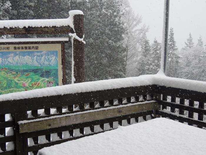 林りん館のテラスも雪帽子