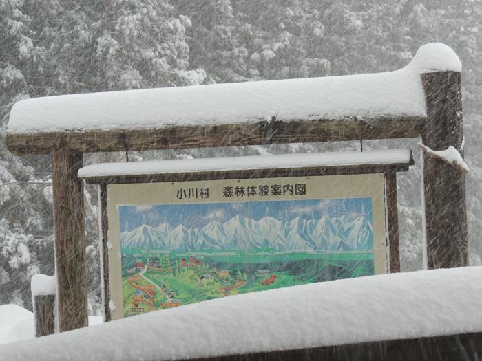 積雪およそ30センチ