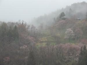 二反田の桜