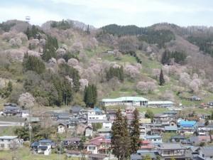 二反田の桜(4月9日)