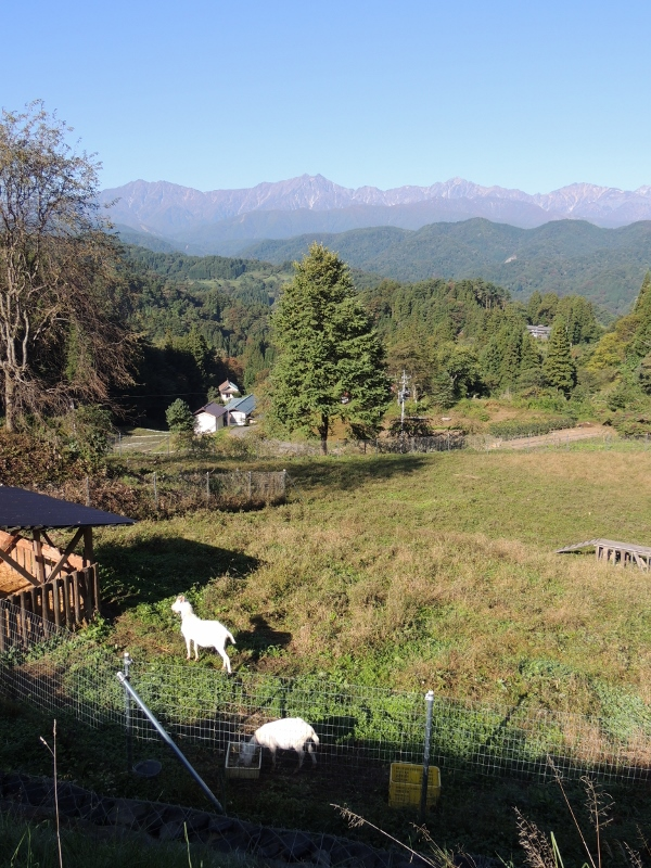10月15日、山羊放牧地