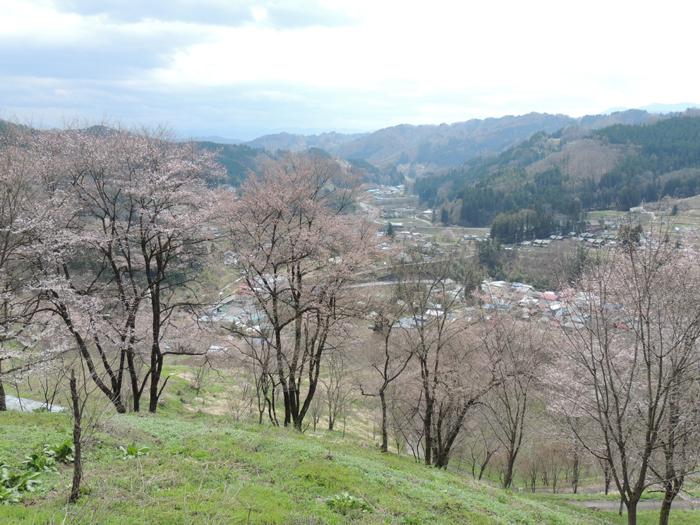 ※二反田の桜