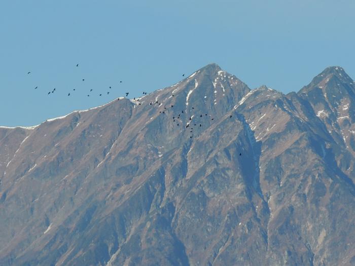 鹿島槍ヶ岳と鳥の群れ