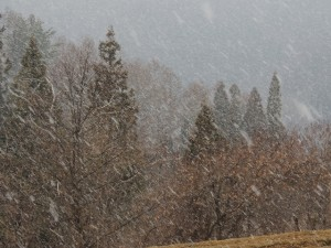 23日の夕方。春の雪は大粒。
