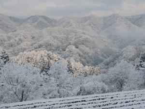 木々は白く・・・山も白く。
