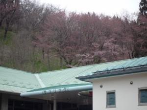 二反田の桜①