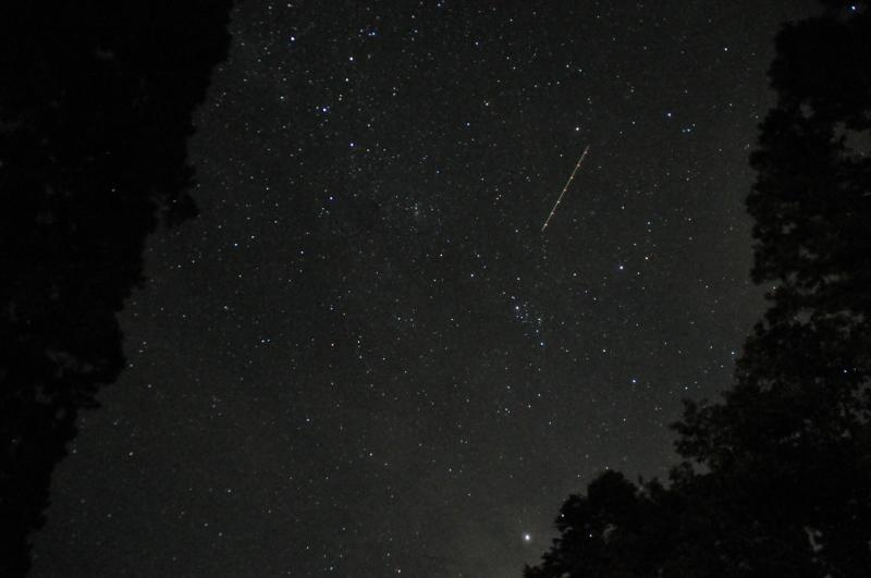 杉の木立の中の星